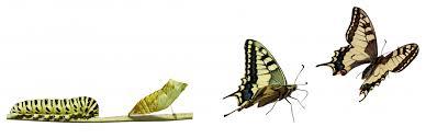 Transformatie